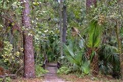 A área de recreação na floresta nacional de Ocala situada em Juniper Springs Florida foto de stock royalty free