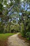 A área de recreação na floresta nacional de Ocala situada em Juniper Springs Florida fotos de stock royalty free