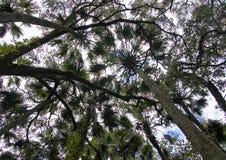 A área de recreação na floresta nacional de Ocala situada em Juniper Springs Florida fotos de stock