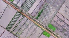 Área de terra do campo do arroz de Rias Imagem de Stock Royalty Free