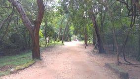 Área del bosque Imagenes de archivo