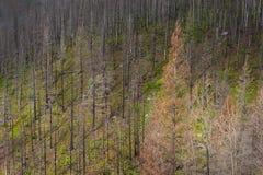 Área del incendio forestal, parque nacional de glaciar Imágenes de archivo libres de regalías