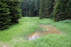 Área del pantano del bosque Fotos de archivo libres de regalías