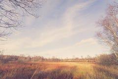 Área del pantano en el otoño Foto de archivo