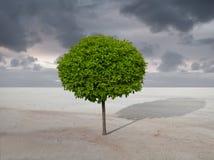 Área deserta e árvore Imagens de Stock