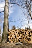 Área do desflorestamento com a pilha dos registros imagens de stock royalty free