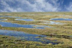 Área do pântano foto de stock royalty free