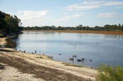 Área do pantanal do lago Bibra Fotos de Stock