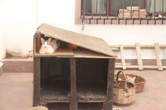 Área egeia - ilha de Tenedos, casa do gato Imagem de Stock