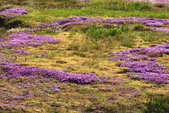 Área Geothermal Haukadalur Fotografia de Stock Royalty Free
