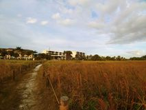 Área gramínea da praia sob um céu azul ensolarado brilhante com as nuvens macias brancas imagens de stock royalty free