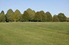 Área grande de la hierba con la fila de árboles Fotos de archivo libres de regalías