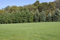 Área grande de la hierba con la fila de árboles Imagen de archivo libre de regalías