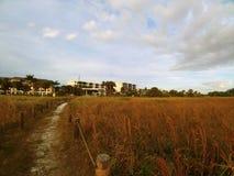Área herbosa de la playa debajo de un cielo azul soleado brillante con las nubes mullidas blancas imágenes de archivo libres de regalías