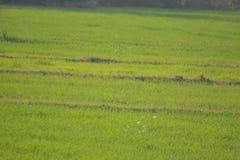 Área muy hermosa con la hierba de Grren Foto de archivo libre de regalías