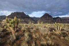 Área nacional da conservação da garganta vermelha da rocha - Nevada do sul EUA Foto de Stock Royalty Free