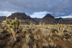 Área nacional de la protección del barranco rojo de la roca - Nevada meridional los E.E.U.U. Foto de archivo libre de regalías