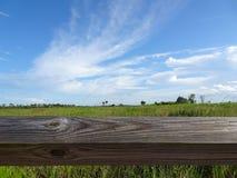 Área natural das clareiras do pinho em pântanos de Florida Imagem de Stock Royalty Free
