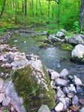 Área natural del estado hueco de Baxters Fotografía de archivo libre de regalías