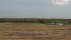 Área NCA en las montañas del cráter, Tanzania de la protección de Ngorongoro almacen de metraje de vídeo
