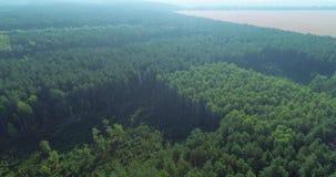 Área panorámica del crecimiento de madera para el corte adicional almacen de video