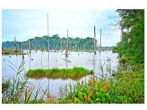 Área pantanosa da paisagem da pintura a óleo Imagens de Stock