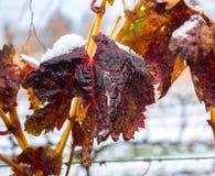 Área rural do vinhedo no inverno imagem de stock royalty free