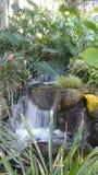 Área tropical dos jardins de Huntington Imagem de Stock Royalty Free