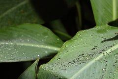 Área tropical solamente y rocío en la licencia tan hermosa Fotografía de archivo libre de regalías