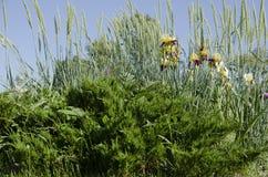 Área verde Imagem de Stock Royalty Free