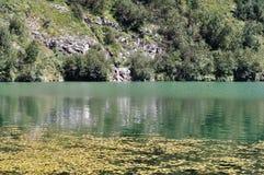 Áreas pantanosos do lago velho Imagem de Stock