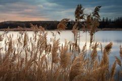 Áreas pantanosos do lago velho Foto de Stock