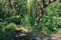 Áreas pantanosos do lago velho Imagem de Stock Royalty Free