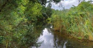 Áreas pantanosos do lago velho Fotos de Stock