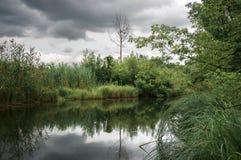 Áreas pantanosos do lago velho Fotografia de Stock