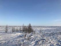 Ártico nevado fotos de archivo