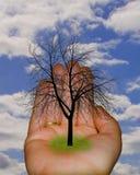 Árvore à disposicão Imagens de Stock
