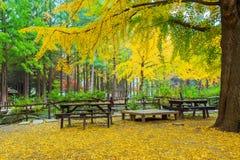 A árvore é outono Fotografia de Stock
