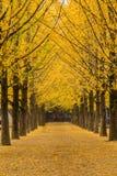 A árvore é outono Fotografia de Stock Royalty Free