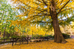 A árvore é outono Foto de Stock