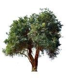 A árvore é quebrada Foto de Stock Royalty Free