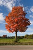 Árvore 01 do outono da natureza Fotografia de Stock