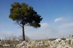 Árvore Fotos de Stock Royalty Free