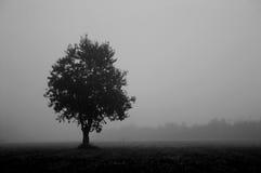 Árvore #2 (b&w) contrasty Foto de Stock