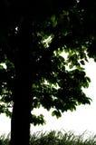 A árvore. Fotografia de Stock