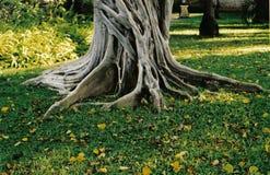 Árvore Imagens de Stock