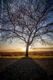 A árvore Imagens de Stock Royalty Free