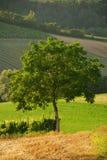 A árvore (4) Imagem de Stock Royalty Free