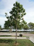 A árvore Foto de Stock Royalty Free