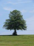 A árvore imagem de stock royalty free